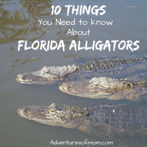 10 Things You Need to Know About Florida Alligators