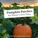 Pumpkin Patches and Where to Find Them:: Finding the Pumpkin Patch Near You