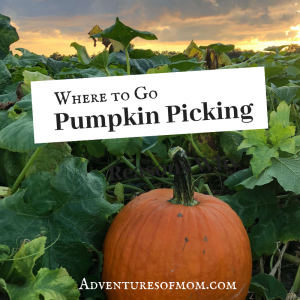 Where to go pumpkin picking