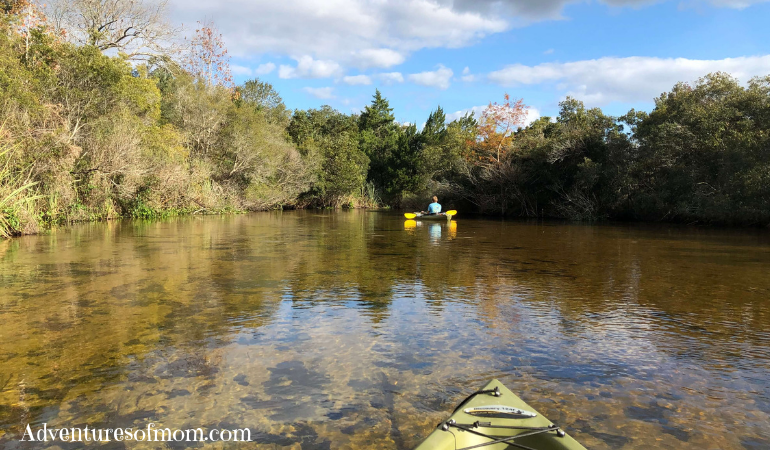 Paddles in the Ocala National Forest