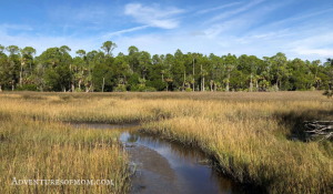 Withlacoochee Gulf Preserve: Hidden Refuge on Florida's Nature Coast