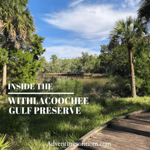 Inside Florida's Hidden Gulf Coast Refuge: The Withlacoochee Gulf Preserve