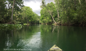Kayaking the Silver River in Marion County Florida