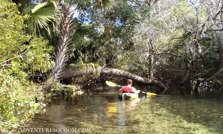 Paddling Juniper Run in the Ocala National Forest in Marion County Florida