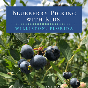Blueberry Picking with Kids in Florida