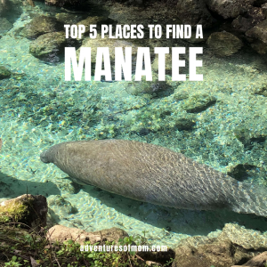 Top places to find a manatee in Florida