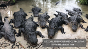 Trainer for a Day at Orlando's Gatorland
