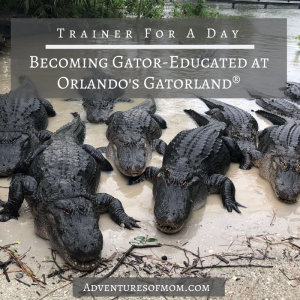 Behind the Scenes at Orlando's Gatorland