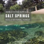 Beneath the Surface at Salt Springs in the Ocala National Forest