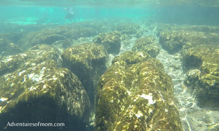 Under the Water at Florida's Salt Springs