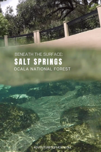 Beneath the Water at Florida's Salt Springs