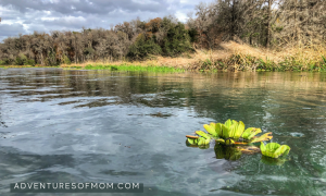 Floating on North Florida's Icehtucknee River