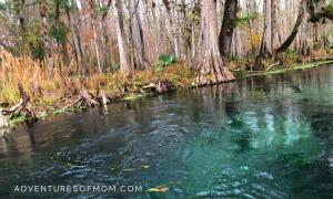 Hidden Springs on the Ichetucknee River