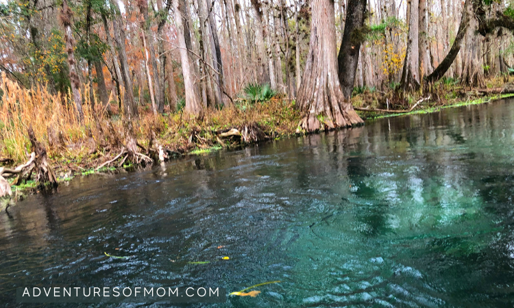 Hidden Springs on the Ichetucknee River