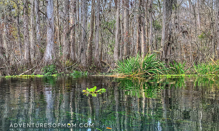 Paddle through paradise on the Ichetucknee River