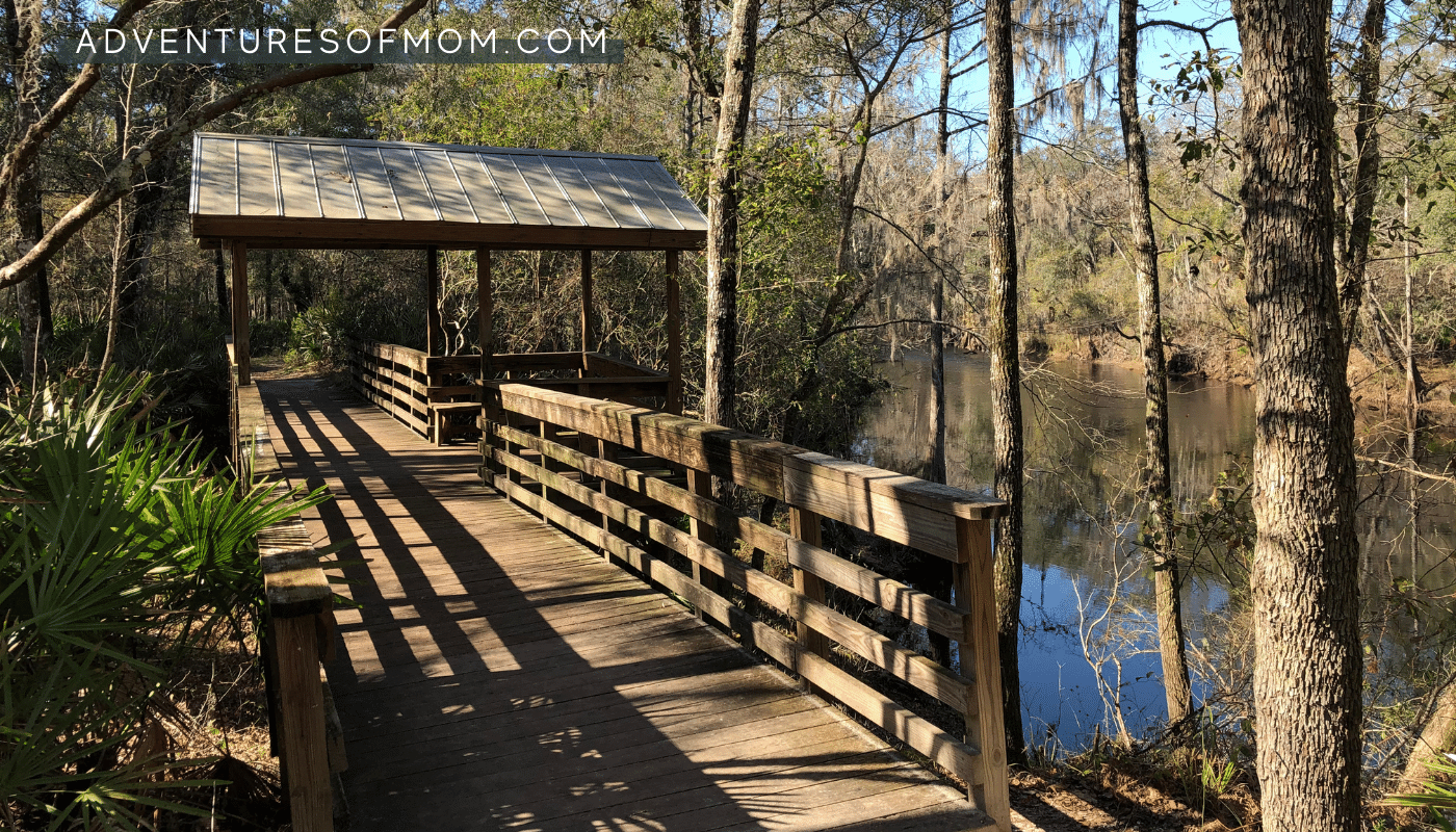 Hiking the River Trail at Florida's O'Leno State Park